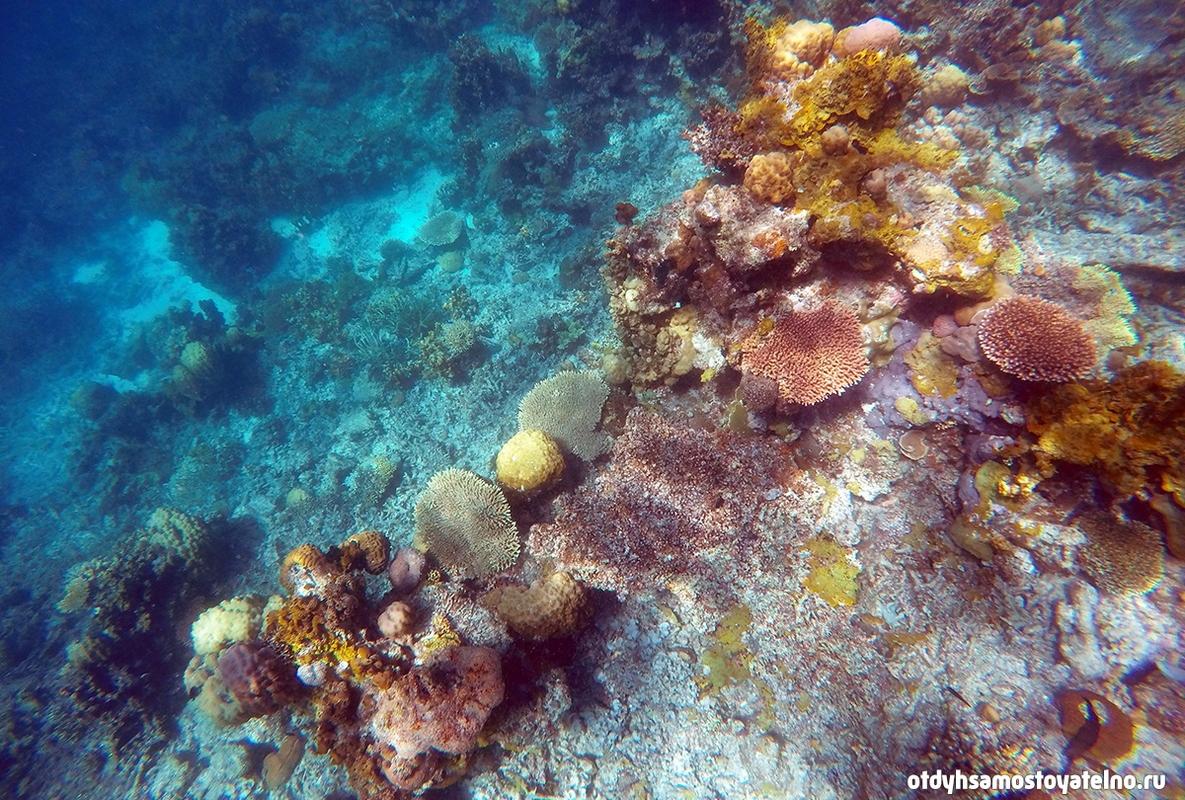 podvodnyi-mir-coral-garden-krasochen-philipiny