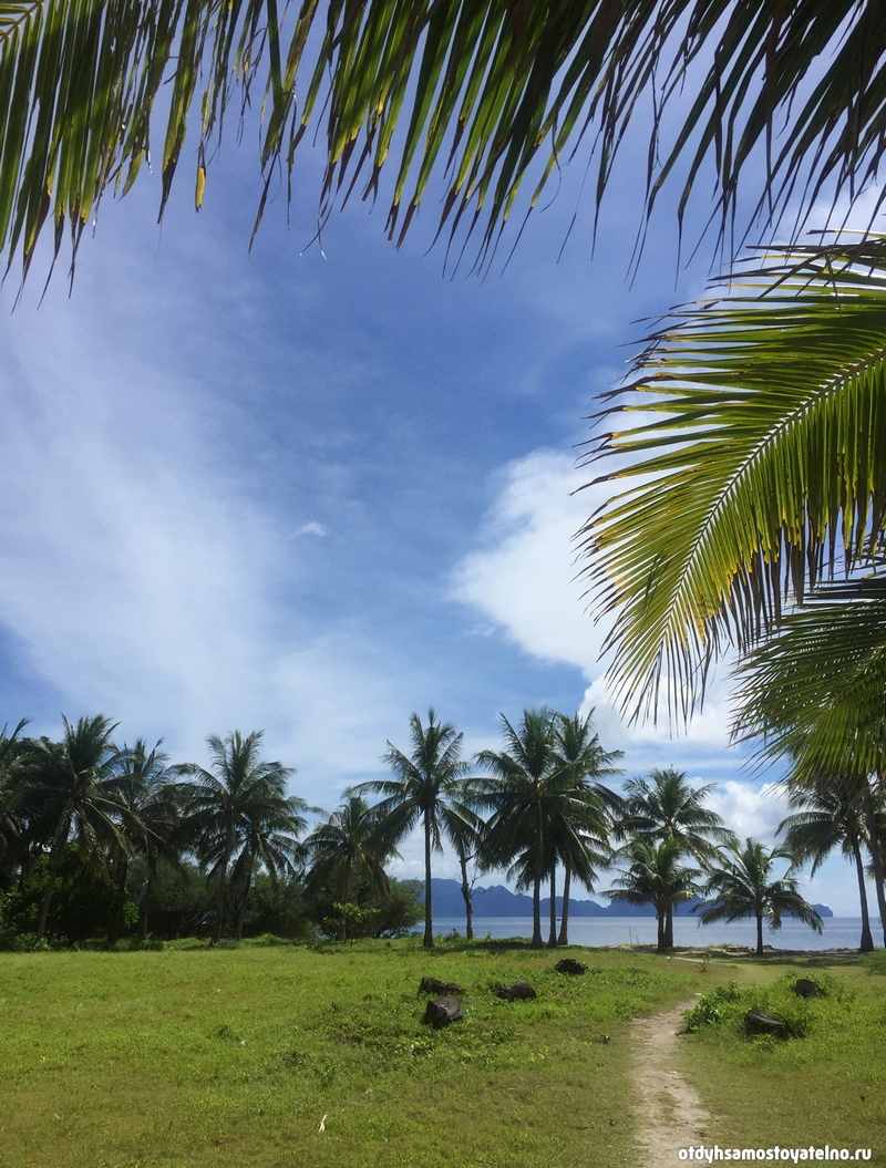 palmy-malcapuya-ostrov-philipiny