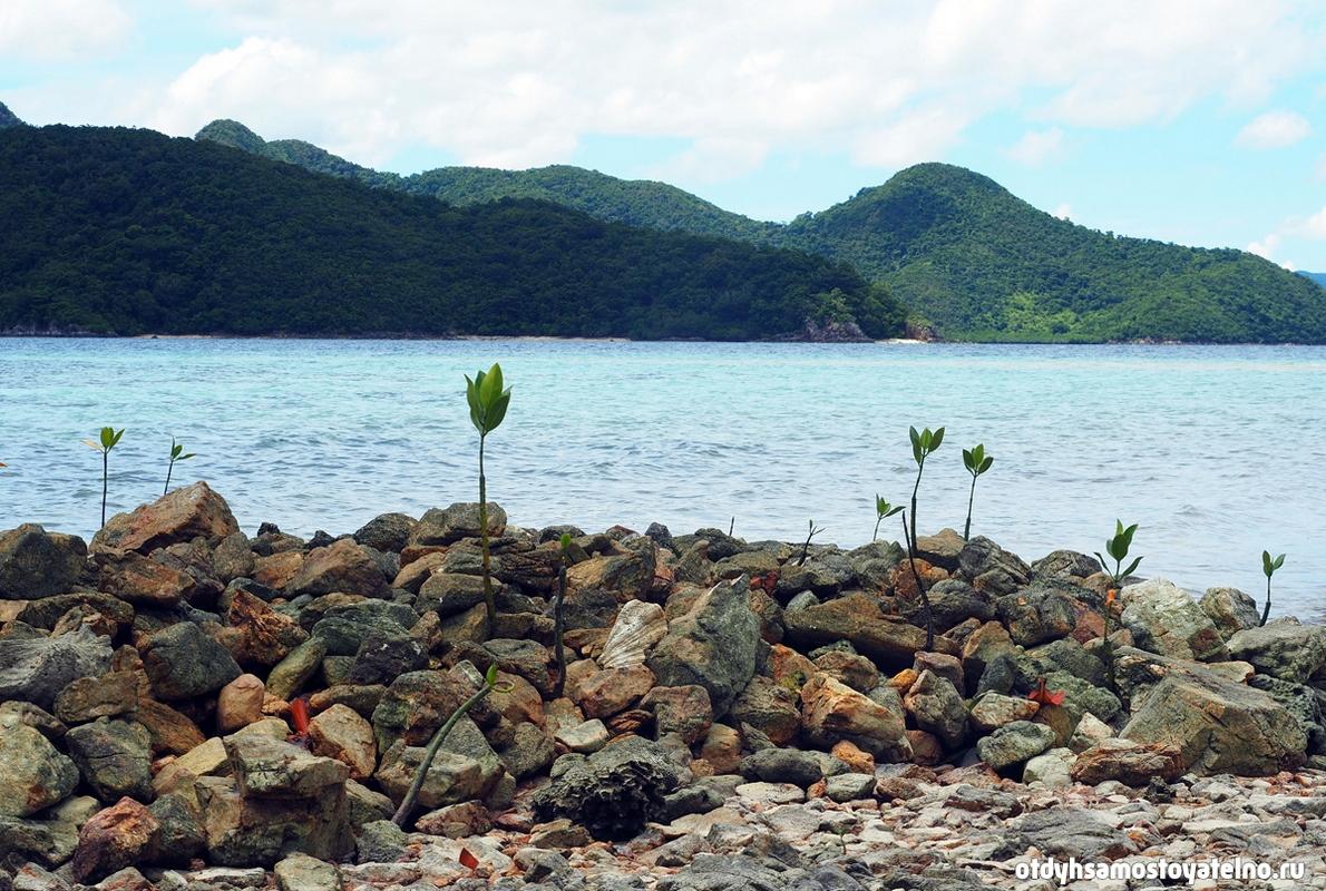 priroda-rasteniya-ostrov-cheron-philipiny