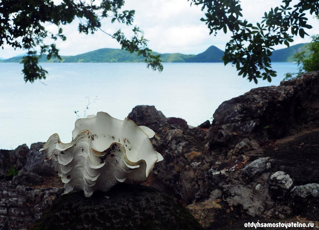 rakushka-zhemchuzhina-ostrov-cheron-philipiny