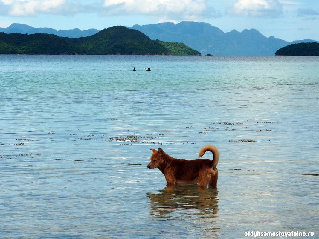 snorkling-sobaka-ostrov-cheron-philipiny