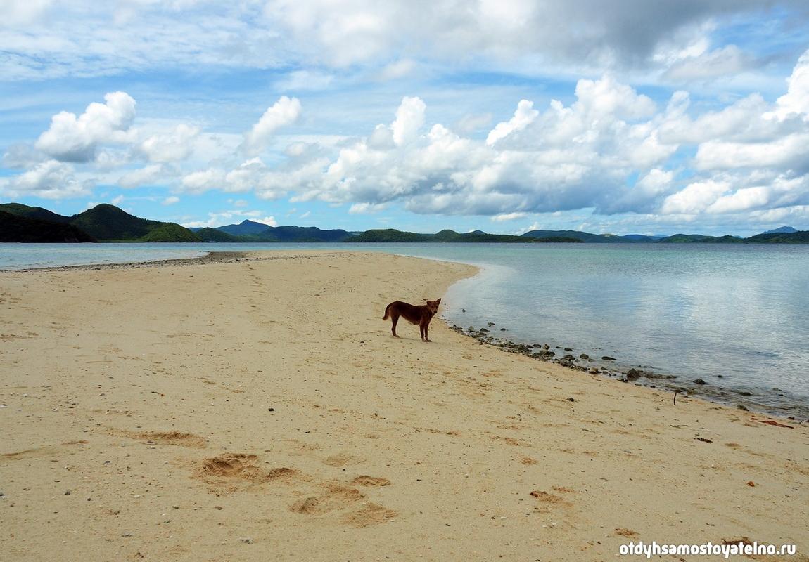sobaka-na-plyazhe-ostrov-cheron-philipiny