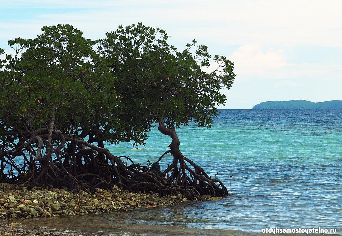 rasteniya-na-kamennom-plyazhe-ostrova-cheron-philipiny