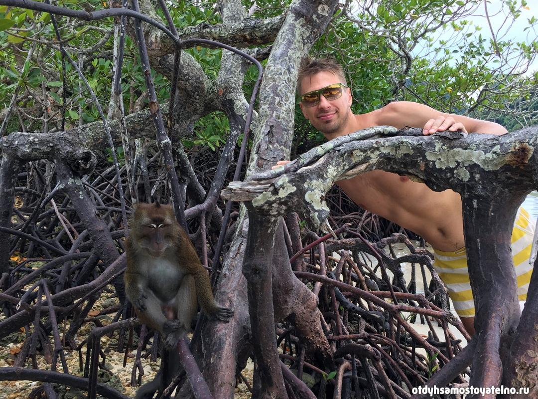 Андрей с обезьяной в мангровом лесу - палаван