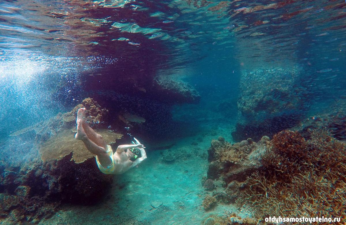 плавание среди коралл