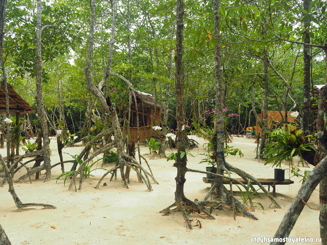 snake island - мангровый лес с орхидеями
