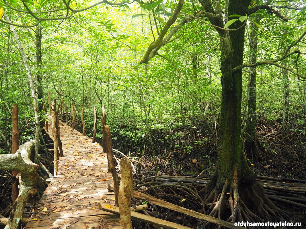 фото мангрового леса - snake island, palawan