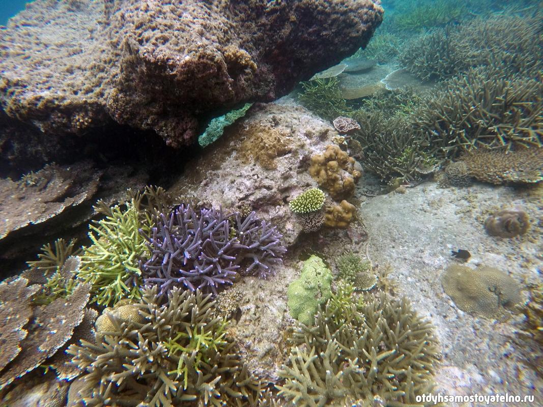 Кораллы на Филиппинах