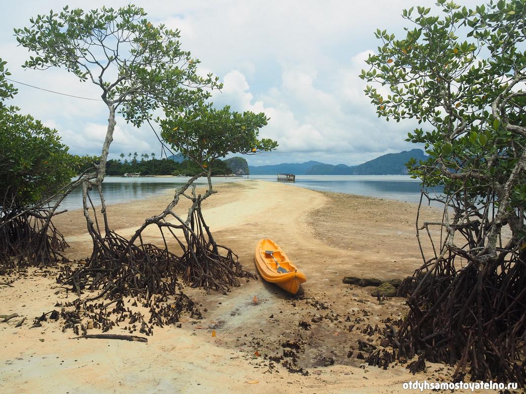 пляж с мангровыми зарослями