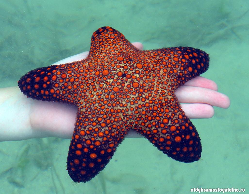 morskaya zvezda snake island elnido