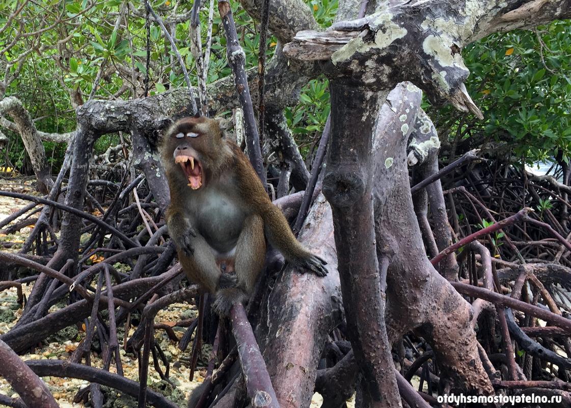 дикая обезьяна на palawan