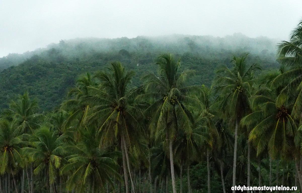 пальмовая роща в дождь