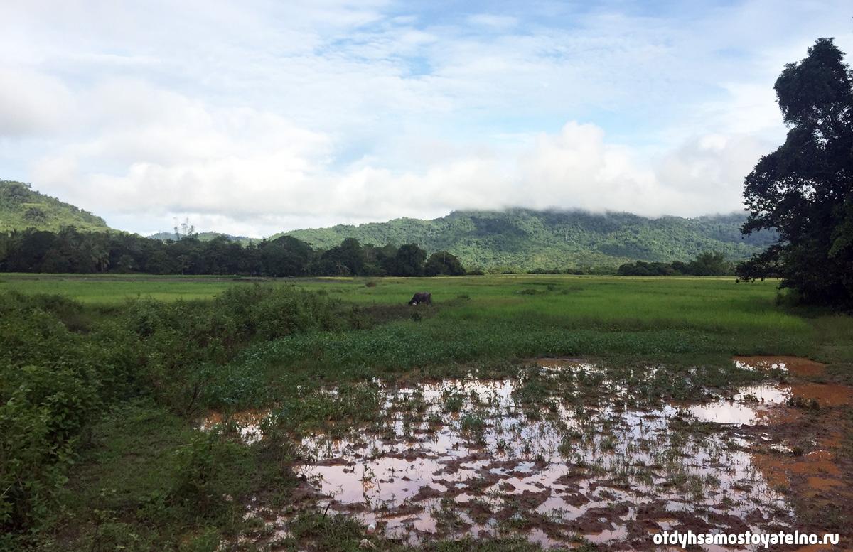 priroda elnido palawan philipiny