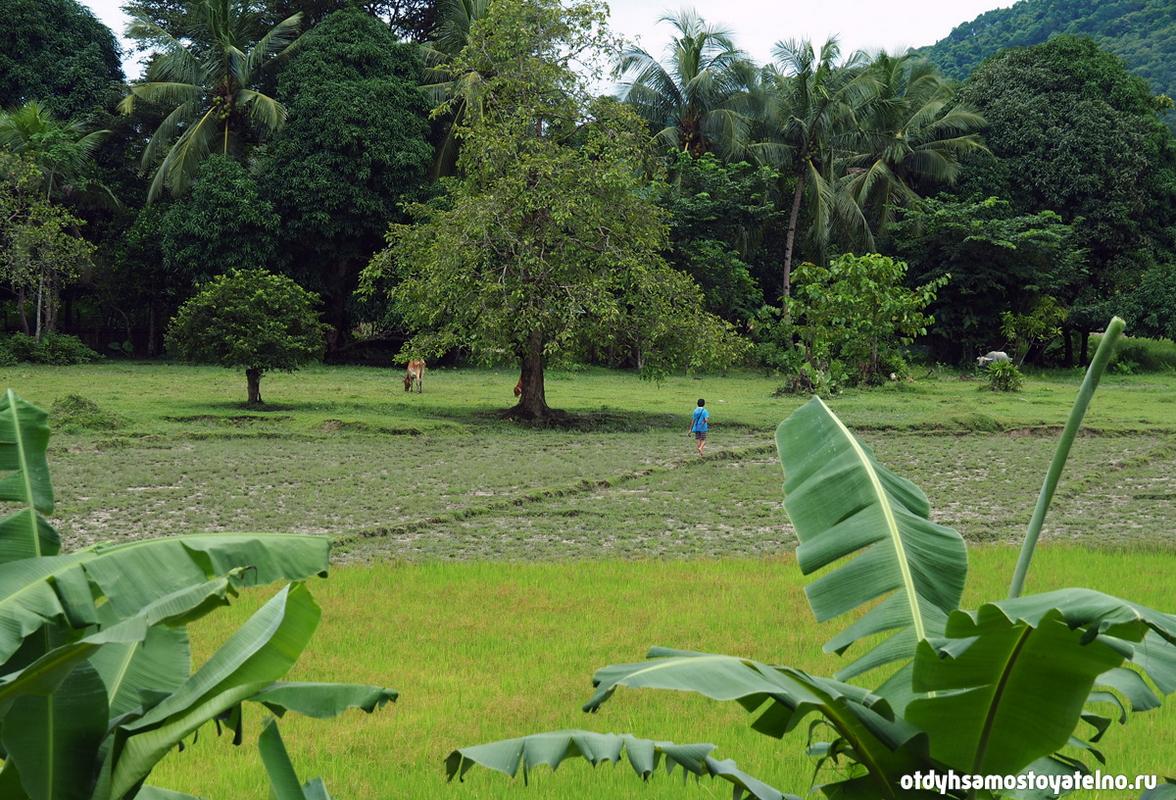 priroda foto elnido palawan philipiny