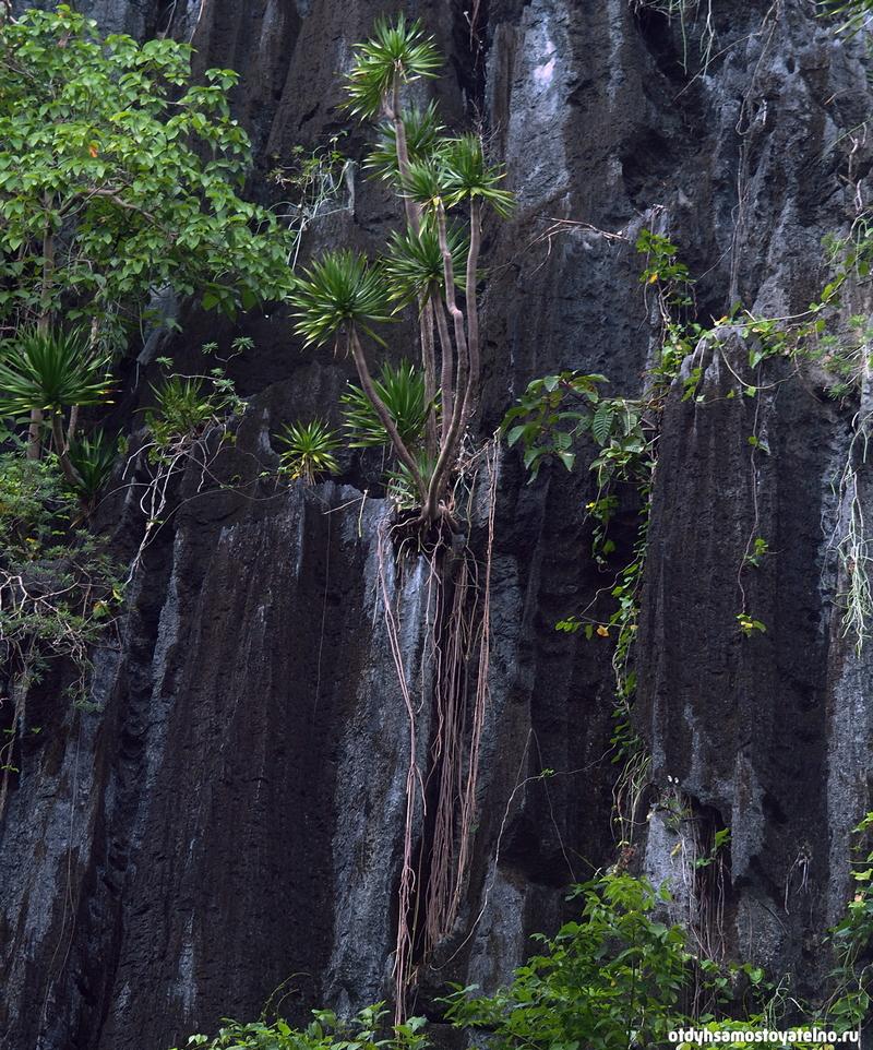 растения на филиппинах