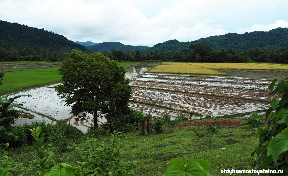 рисовые поля на филиппинах