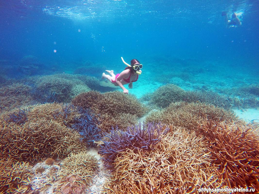 коралловый подводный мир филиппин