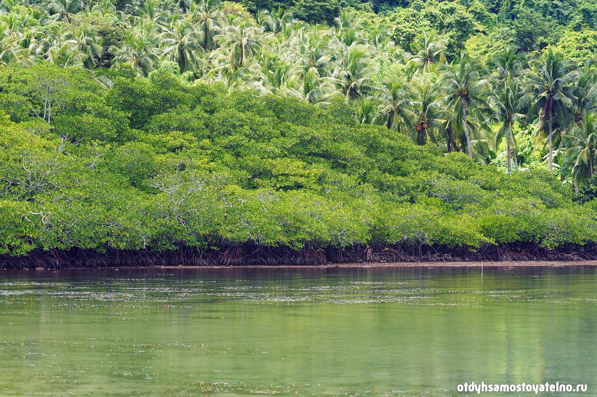мангровый лес на палаване