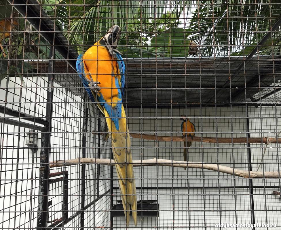 2blue_parrot_resort_moalboal