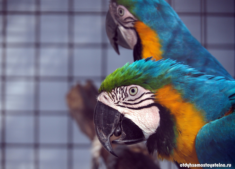 2blue_parrot_resort_moalboal_cebu