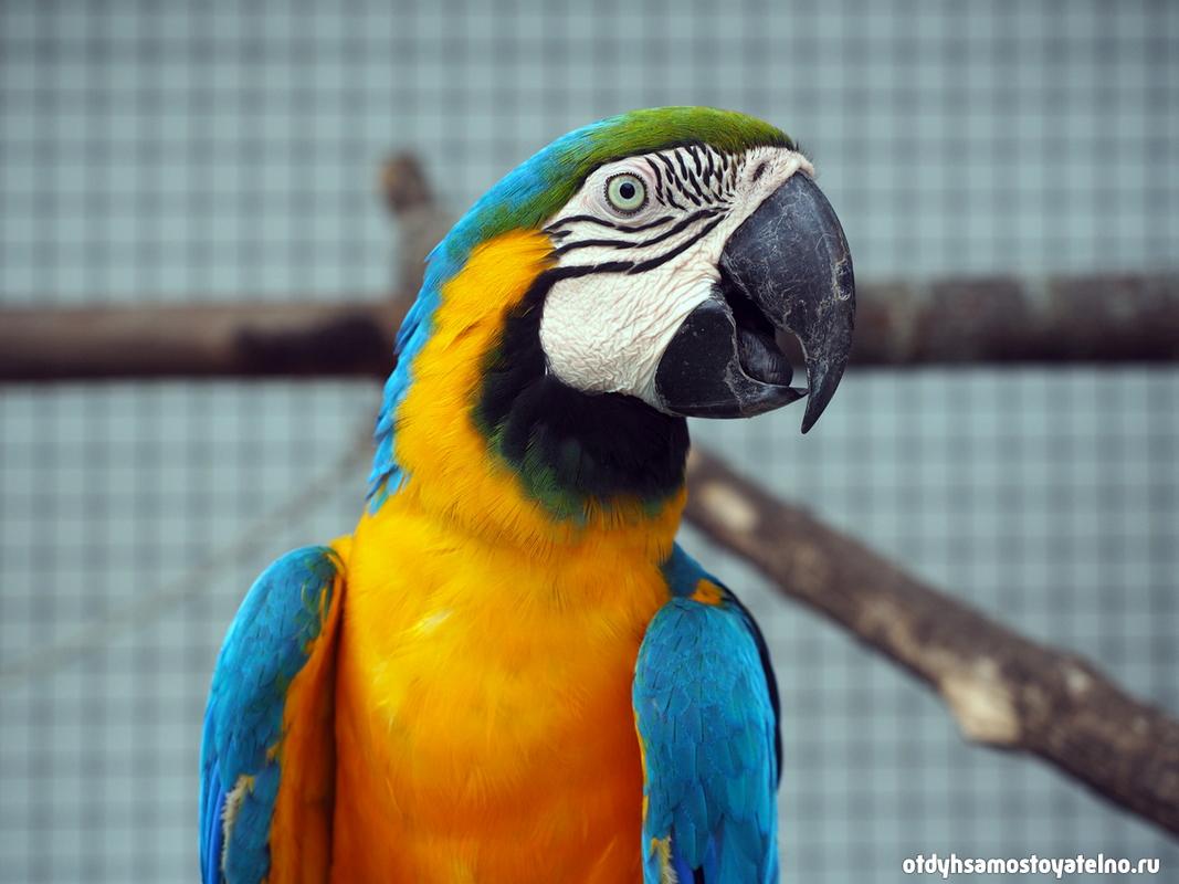 blue_parrot_resort_moalboal