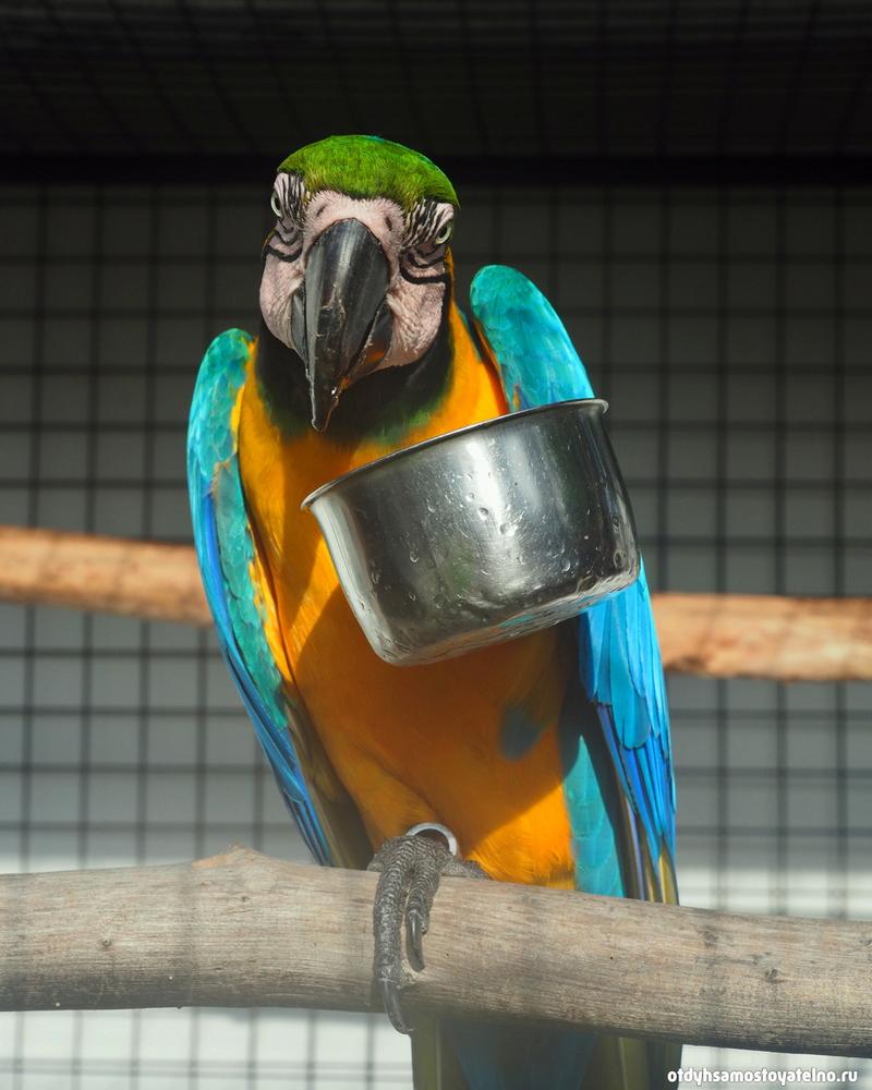 blue_parrot_resort_moalboal_cebu