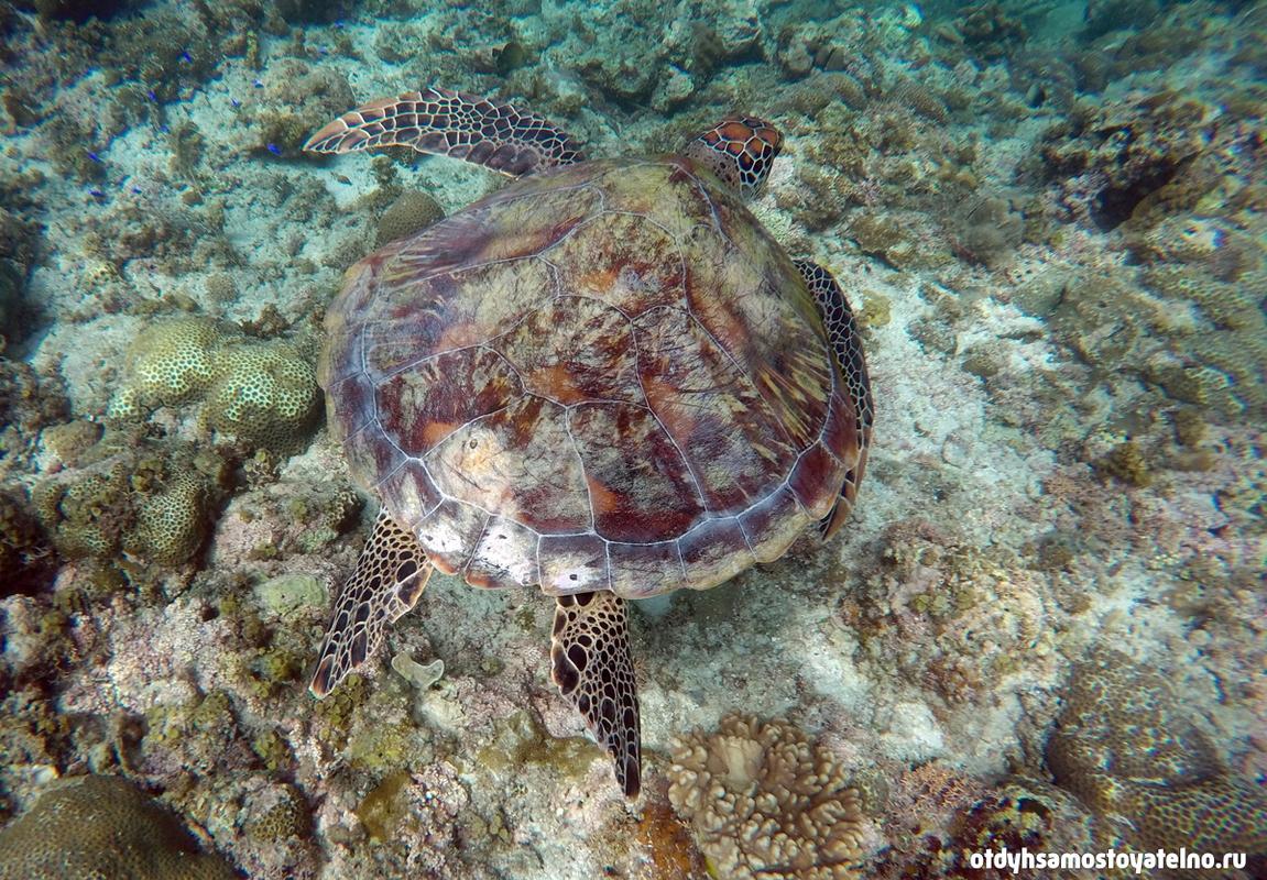 Подводная природа Филиппин - черепаха и кораллы