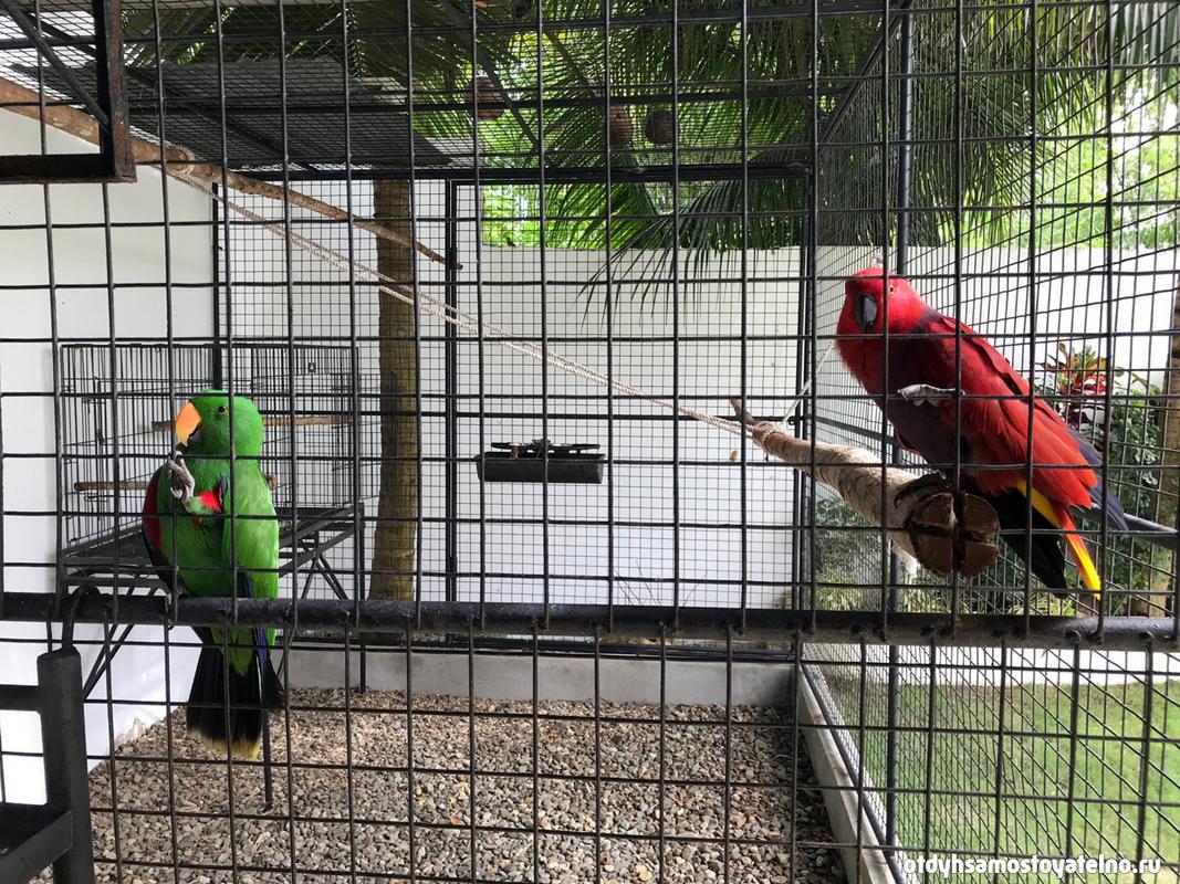 green_parrot_resort_moalboal_cebu