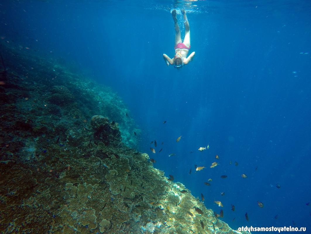 snorkling_veronika_moalboal_cebu