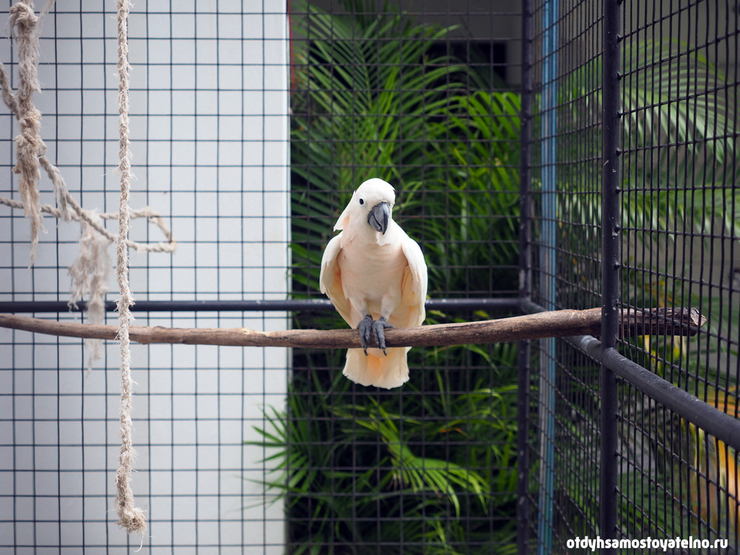 white_parrot_resort_moalboal_cebu