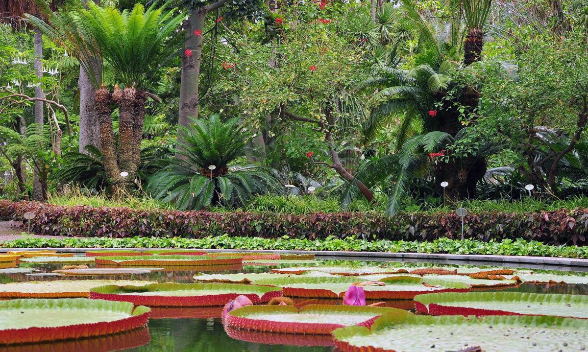 Ботанический сад Тенерифе (Botanical Garden)