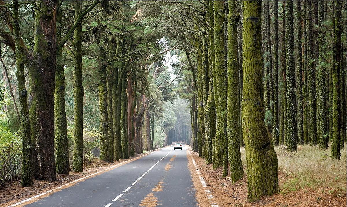 Лес Эсперанса (Bosque de la Esperanza)