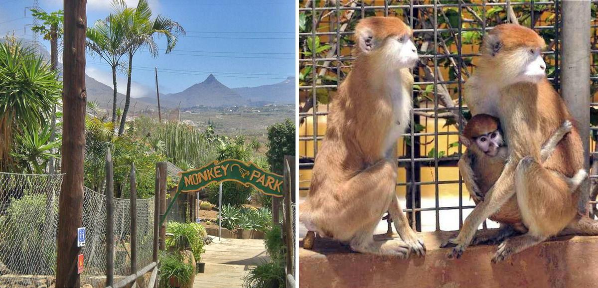 Парк Обезьян (Tenerife Zoo Monkey Park)