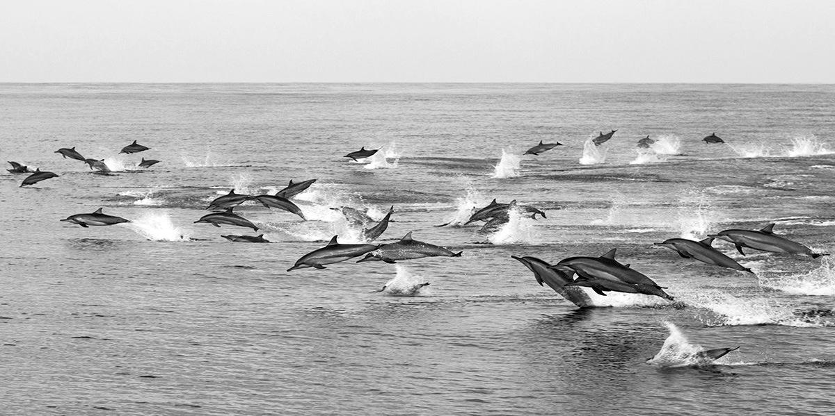kity_delfiny_bohol