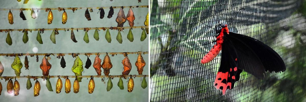 Парк Бабочек на Бохоле