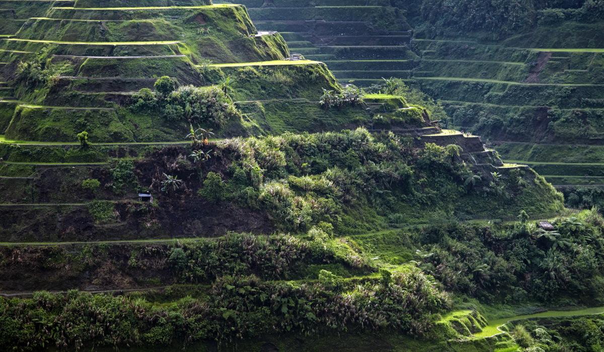 Рисовые террасы - Лусон