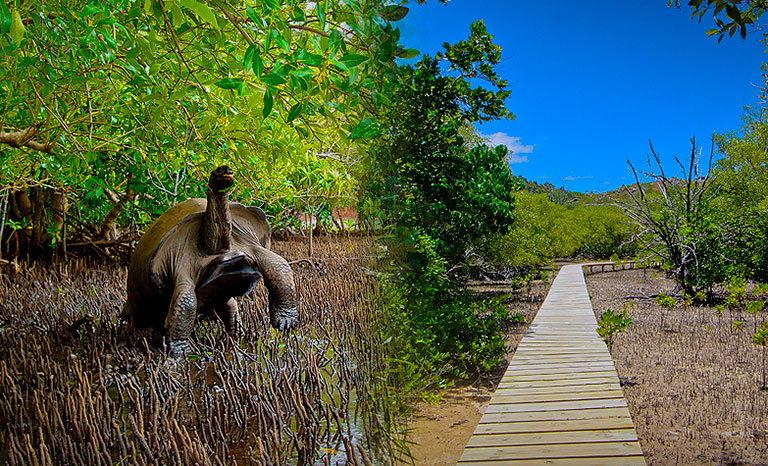 baie ternay marine national park сейшелы