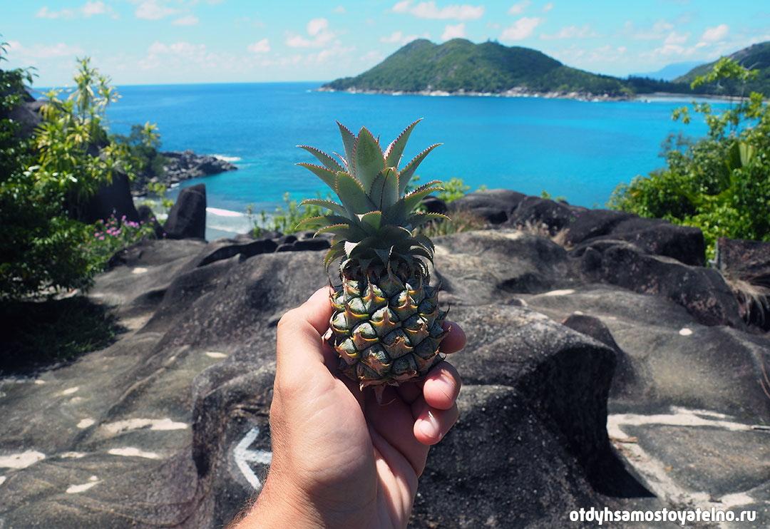 фото ананаса на сейшелах