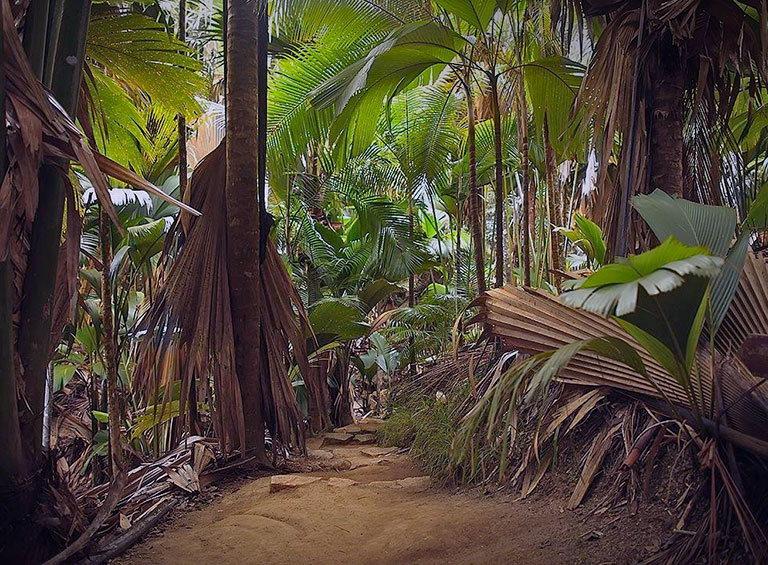 национальный парк vallee de mai сейшельские остраова