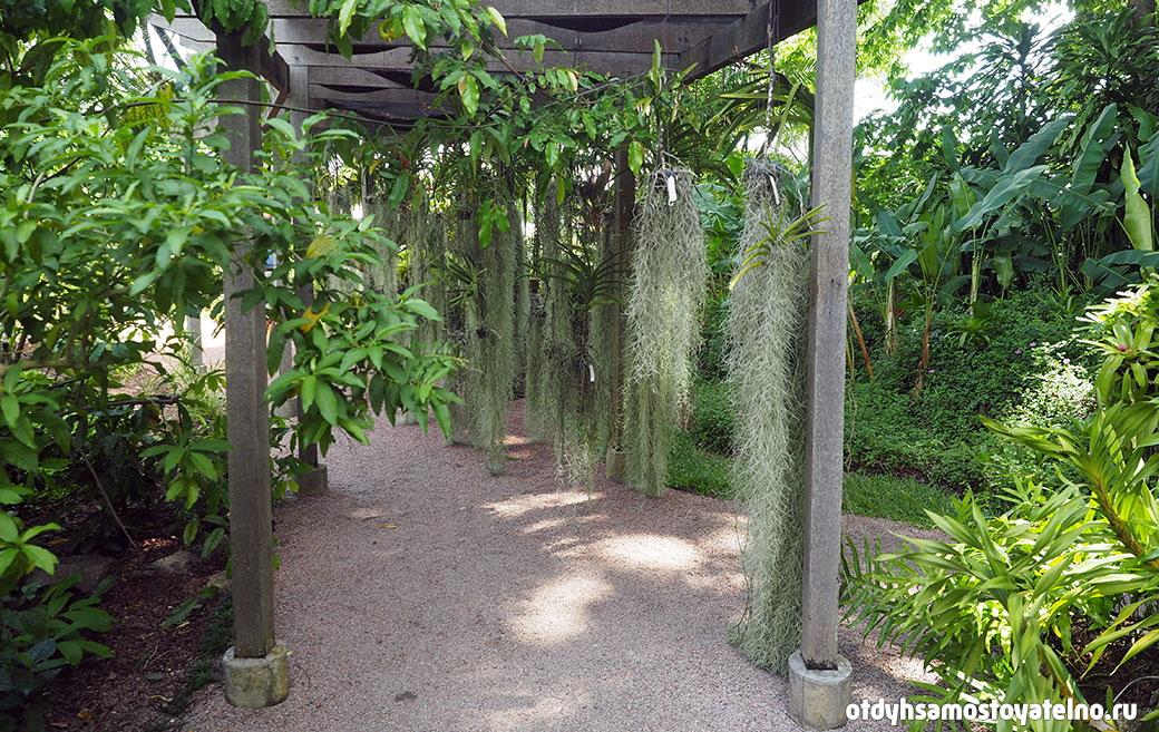 орхидеи в ботаническом саду на сейшелах