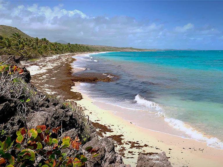 пляж anse_grosse roche beach ла диг