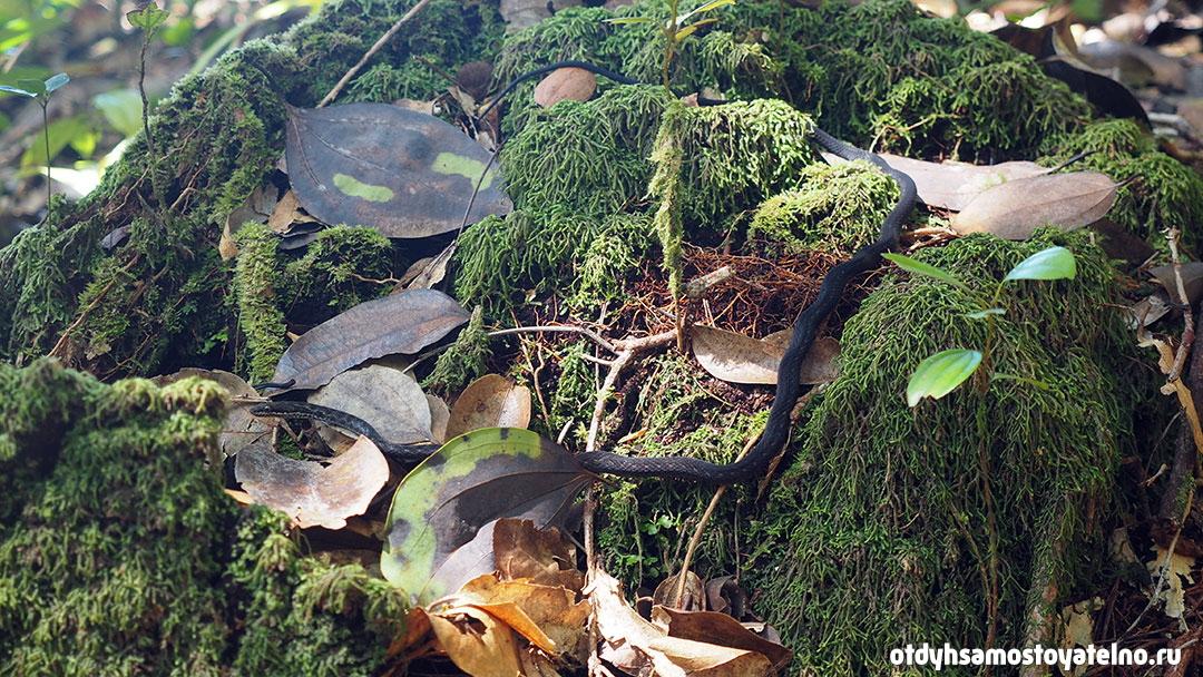 природа на сейшелах - змея