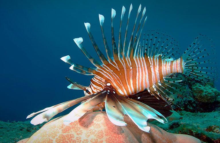sainte anne marine national park сейшелы
